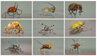 3d model insect master