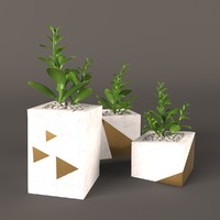 plant money tree 3d max