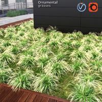 grass plant ornamental 3d model