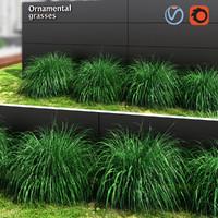 max grass plant ornamental