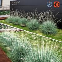 grass plant ornamental 3d max