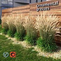 grass plant ornamental 3d obj
