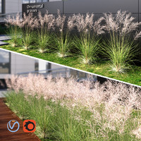 max grass ornamental