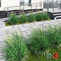 3d model grass plant ornamental