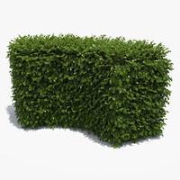 free boxwood hedge 3d model