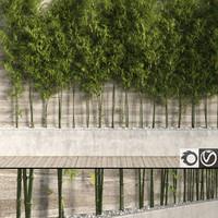 Bamboo Trees 2