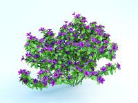 azalea japonica 2