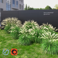 Ornamental grass Miscanthus collection