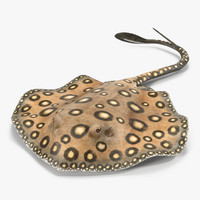 River Stingray Pose 3