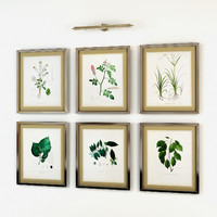 Eichholtz Botanical Prints Framed