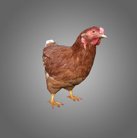3d model of low-poly chicken