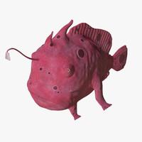 3d antennarius frogfish model
