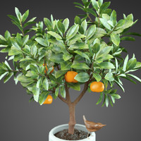 Home Plant Orange tree