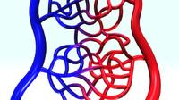 Arterys & Veins