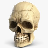 Human Skull 4