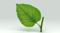 maya plant leaf