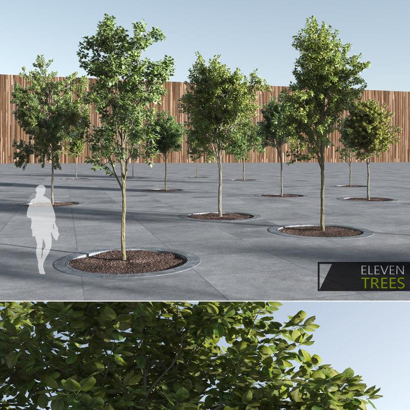 e_trees (1).jpg