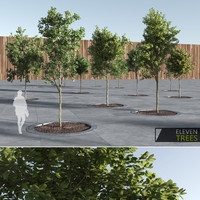 Eleven Trees for Archviz