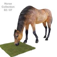 Realistic Horse 02