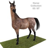 Realistic Horse 03