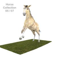 Realistic Horse 05