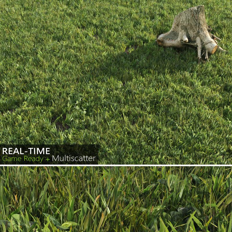 grass (1).jpg