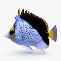 Tinkeri Butterflyfish