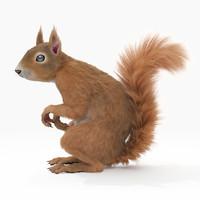 max realistic squirrel rigged fur