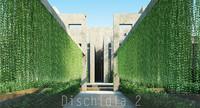 Dischidia 2
