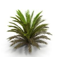 Fern bush 1