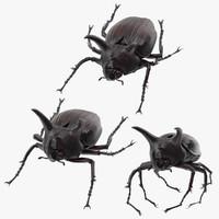 Rhinoceros Beetle Pose 01 (2)