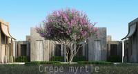 5 Crepe myrtle