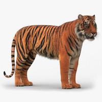 3d rigged tiger fur model