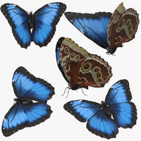 Blue Morpho Butterfly 5 Poses
