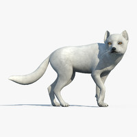 Arctic Fox(RIGGED)