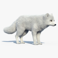 Arctic Fox(FUR)