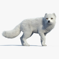 Arctic Fox(FUR)(RIGGED)