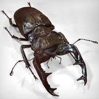 3d stag beetle model