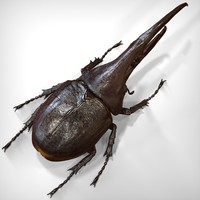 hercules beetle 3ds