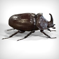 rhinoceros beetle 3d model
