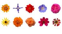 Flower texture 10 pack