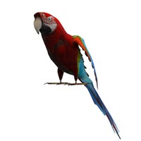 Parrot Animated