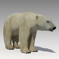 Polar Bear Animated