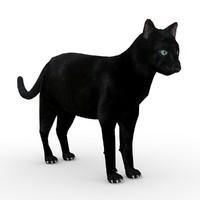 Black Cat Animated