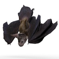 Vampire Bat Animated