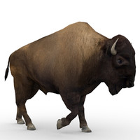 American Buffalo Animated