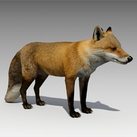 Red Fox Animated