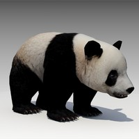 Giant Panda Animated
