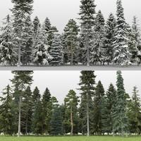 60+60 Pine Trees