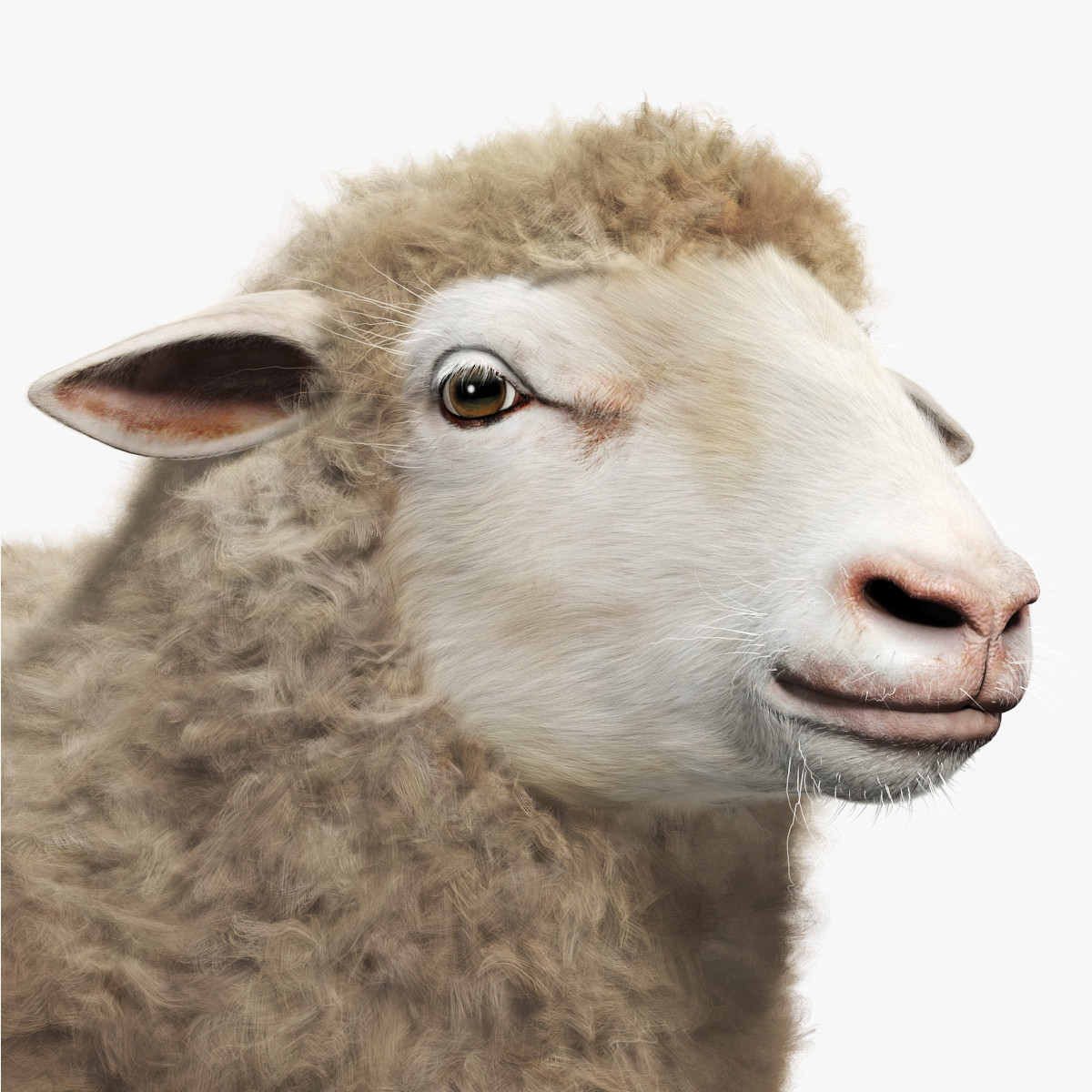 3DS-Sheep-Adult-Preview-04-Turbosquid-No-Branding.jpg